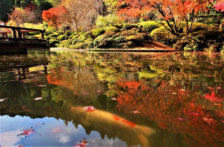 バンジ池と紅葉