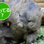 【動画】動物園の動物って何を食べてるの?