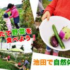 【親子で!】池田で楽しめる無農薬野菜の収穫&調理体験「畑で朝ごはん」