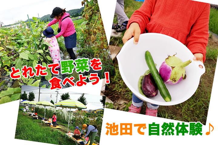 親子で!】池田で楽しめる無農薬野菜の収穫&調理体験「畑で朝ごはん」