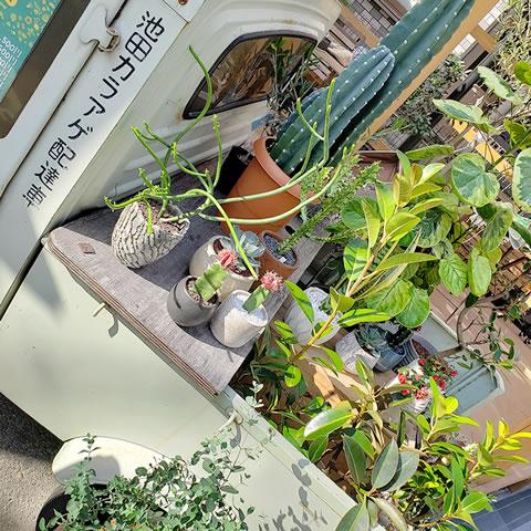 地元園芸店が手掛ける植物